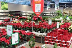 Photo credits: Oliver Mathys. Garden Center Displays, Garden Centre, Flower Nursery, Garden Shop, Display Ideas, Gardening, Christmas, Vivarium, Nursery Trees