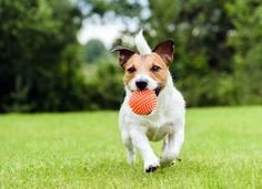 9 Ways To Pay Less For Home Insurance Hunde Futter Gesundes Hundefutter See