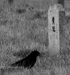 Chinese Cemetery, Victoria BC [500x600][OC] - Imgur