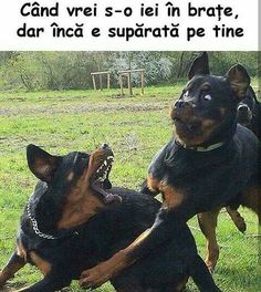 Top 29 Funny Animal Memes Humour – Life Is Memes Funny Animal Jokes, Funny Dog Memes, Crazy Funny Memes, Really Funny Memes, Cute Funny Animals, Funny Relatable Memes, Funny Cute, Funny Dogs, Haha Funny