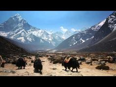 Google launches virtual tour of Everest region; contribution to armchair tourists | News