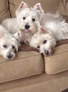 Emma, Wrigley and Macduff