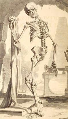 Govard Bidloo Bidloo's anatomy represents a transitional stage. Alongside harshly realistic illustrations, he offers a few memento mori (reminders of mortality). Memento Mori, Anatomy Drawing, Anatomy Art, Human Anatomy, La Danse Macabre, Skull Reference, Dance Of Death, Skeleton Art, Skeleton Bones