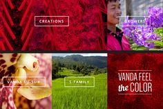 Vanda Susu - New Website
