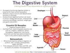 System #3: Digestive System   Where nutrition and the body do not meet--- Medicinal grade essential oils can fill in the gaps. These posts are to help us become everyday essential oil users, here are some tips to assist you in repair and recovery supporting the endocrine system for good gut flora and digestive tract support. ~Sharon Labrum McDonald Green Essentials — in Kelso, WA.