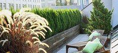 Les arbustes brise-vue permettent de créer de beaux espaces d'intimité sur votre balcon ou votre terrasse.