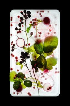 herbier-glace-6.jpg (850×1276)