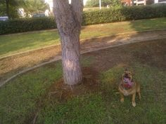My tongue is as long as this tree.... :P