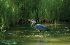 Wetland | NOAA - National Oceanic and Atmospheric Administration - Conserving ...