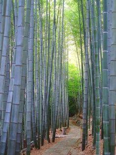 Die 24 Besten Bilder Von Blumen Y Bambus Florals Gardening Und Bamboo