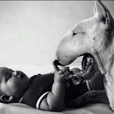 Baby's best friend #Bully