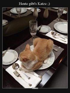 Heute gibt's Katze ;) | Lustige Bilder, Sprüche, Witze, echt lustig