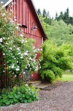 LILJOR OCH TULPANER: Blommor inne och ute,- och så lite annat...