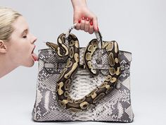 Tyler Shields -- Snake on a Birkin ... Goes Face-to-Face with a Model (VIDEO + PHOTOS)