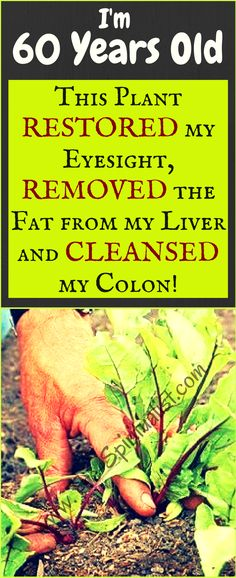 This Plant Will Improve Your Vision, Remove Fat from Your Liver and Cleanse Your Colon (Eat It Every Day!)