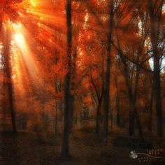 moment in time by ildiko-neer on DeviantArt