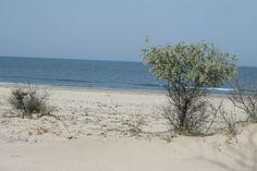 beach in Sfantu Gheorghe, Danube Delta