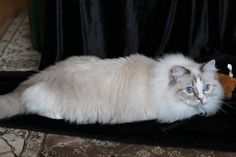 Hunter is looking for a new home. Blue lynx mitted