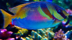 Peixes Coloridos Aquário