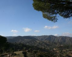 """Parque Natural Sierra de Andújar   38· 10' 42'' N 4· 2' 8'' W  Oasis de paz en el corazón de la Sierra Morena jiennense, posee unos relieves ondulados en el centro del territorio, paisajes abruptos en el curso de algunos ríos y arroyos, y relieves quebrados en toda la franja norte. En esta zona montañosa de Sierra Quintana, se encuentra el Pico """"Burcio del Pino"""" con la máxima cota, 1.290 m. sobre el nivel del mar. En él se encuentra ubicado el Santuario de Nuestra Señora de la Cabeza."""