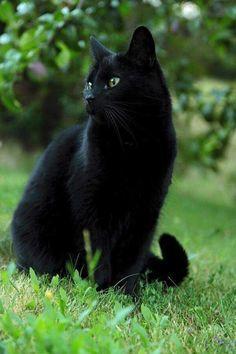 WOW..... BEAUTIFUL CAT <3 <3 <3 <3