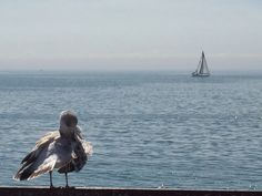 Sailboat and seagull, from the Island