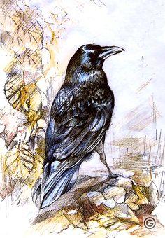 by Oksana Oxy Gen Gatalskaya graphic#illustration#bird#