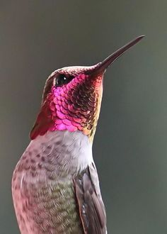 Hummingbird = Neon Glow Greeting Card by Angie Vogel Pretty Birds, Love Birds, Beautiful Birds, Animals Beautiful, Cute Animals, Pink Animals, Exotic Birds, Colorful Birds, Exotic Animals