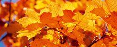 Was tun mit all dem Herbstlaub?