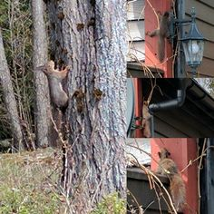 #squirrels visiting