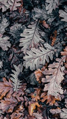Flowery Wallpaper, Fall Wallpaper, Cute Wallpaper Backgrounds, Aesthetic Iphone Wallpaper, Nature Wallpaper, Cute Wallpapers, Aesthetic Wallpapers, Autumn Leaves Background, Leaf Background