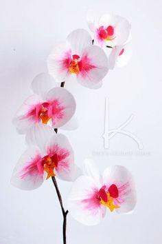 Wafer paper phalaenopsis orchid Phalaenopsis Orchid, Orchids, Orchid Cake, Wafer Paper Cake, Sugar Craft, Cake Videos, Sugar Flowers, Flower Tutorial, Rice Paper