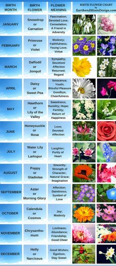 <br> The birth flowers for April, Daisy and Sweet Pea, are depicted in our birth flower chart. Symbolic flowers also inspire our unique vine-like lariat designs. Future Tattoos, New Tattoos, Body Art Tattoos, Tatoos, Unique Tattoos, Tattoo Famille, Manga Florida, Birth Flower Tattoos, Tattoo Flowers