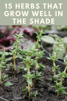 Growing Greens, Growing Herbs, Outdoor Landscaping, Outdoor Gardens, Shade Garden, Garden Plants, Shade Plants, Shade Flowers, Patio