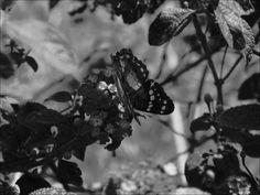 Contraste tonal.  Jardin Botánico de Naguanagua.  Nikon COOLPIX 100 f/5.6 Exposure time  1/1044 sec. ISO - 160 Focal Length: 60mm