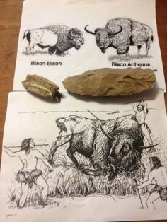 Ancient bison tooth beside 12000 year old spear head found near the barn