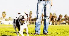 """Mississippi, alla polizia """"licenza di uccidere"""" i cani pericolosi"""