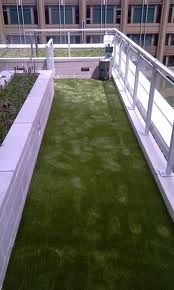 I like the fake grass for the dog run. Easy to hose off & clean - luxury dog kennel Dog Yard, Dog Fence, Chinchilla, Luxury Dog Kennels, Dog Spaces, Pet Hotel, Play Yard, Dog Rooms, Blue Dog