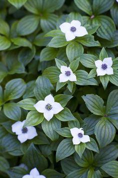 Shade Garden, Garden Plants, White Gardens, My Secret Garden, Clematis, Garden Planning, Sustainable Design, Garden Inspiration, Garden Ideas