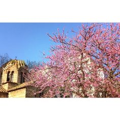 The beautiful spring came; and when Nature resumes her loveliness the human soul is apt to revive also. Human Soul, Blossom Trees, Spring Is Coming, Athens, Spring Time, Taj Mahal, Resume, Greece, Journey