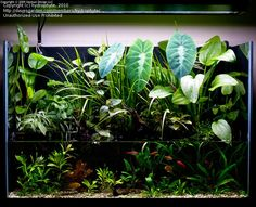 using plants to cover up riparium planters