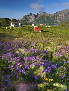 Coastal Landscape Near Hovden, Vesteralen District, Nordland, Norway