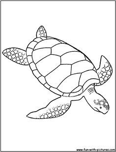 Sea Turtle Giant Green Coloring Page