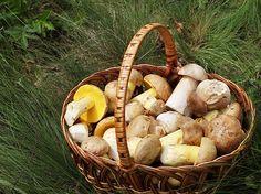 How to find wild mushrooms in West Virginia