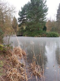 Winter at Bodenham Arboretum