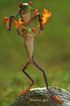 Playing Leap Frog╰★╮