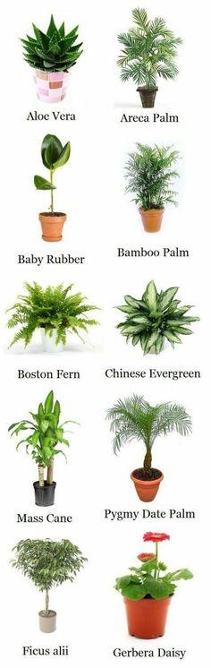 zimmerpflanzen arten zimmerpalmen palmenarten