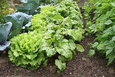 Bien associer les légumes au potager | Le Magazine — Gamm vert