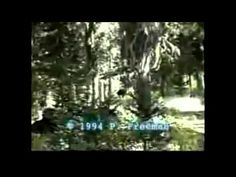 I know this is long overdue and it's more of an enhancement than a breakdown. I think this is real bigfoot footage. Freeman's reaction seems very real and the bigfoot looks & moves like a real creature and not a guy in a suit .  This was shot in 1994.