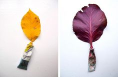 Colour and leaves